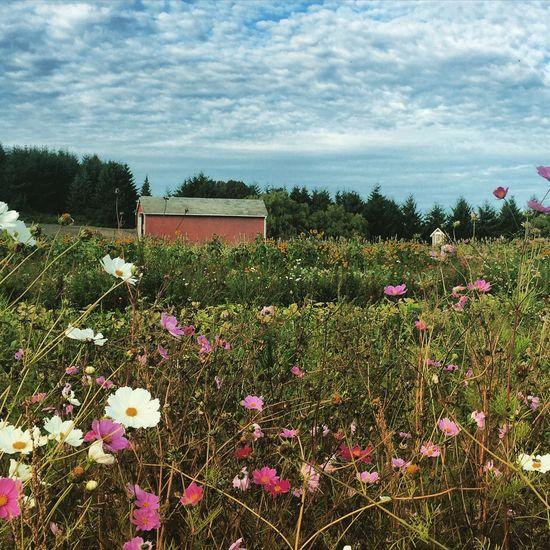 Fall on the farm. Nature Fall Beauty Clouds And Sky Blue Sky