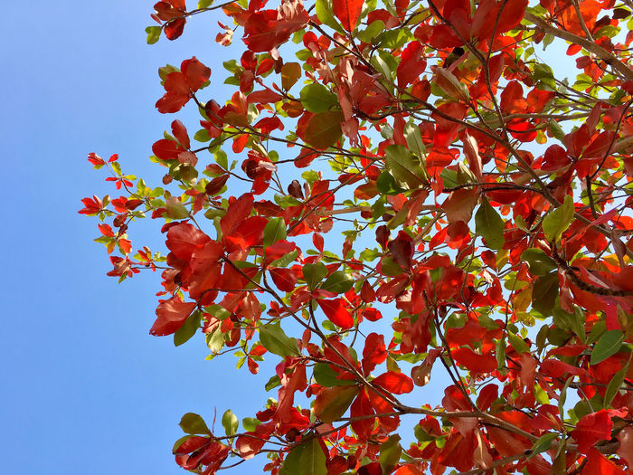 Plant Red Low