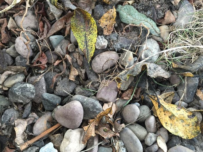 Winter ground Leaf Nature High Angle View No People Full Frame Fruit Outdoors Autumn Leaves Close-up Leafs And Stones Grey Day Acorn Freshness
