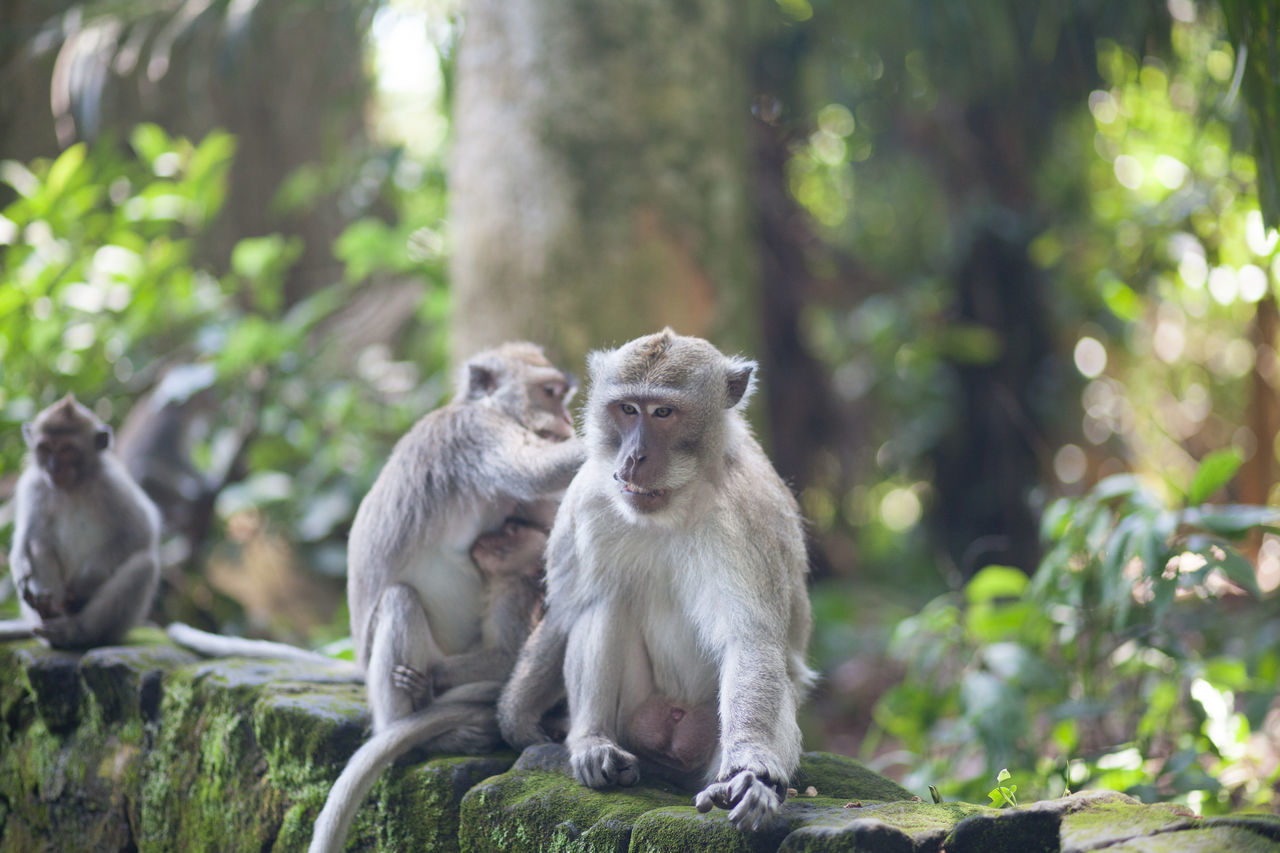 animals in the wild, animal themes, monkey, mammal, animal wildlife, two animals, infant, focus on foreground, day, animal family, young animal, nature, sitting, outdoors, togetherness