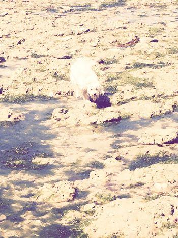 Capturing Freedom Isis😍 Ilovemydog Myprincess🐶🐶 Ile D'Oleron Holidays ☀ Relaxing Time