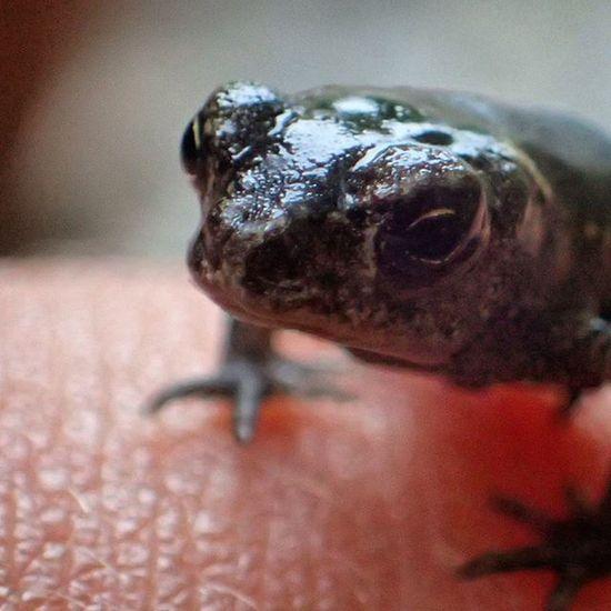 Frog Nature Macro Macrophotography Macroworld Babyfrog Beautiful Wild Wildlife Freedom