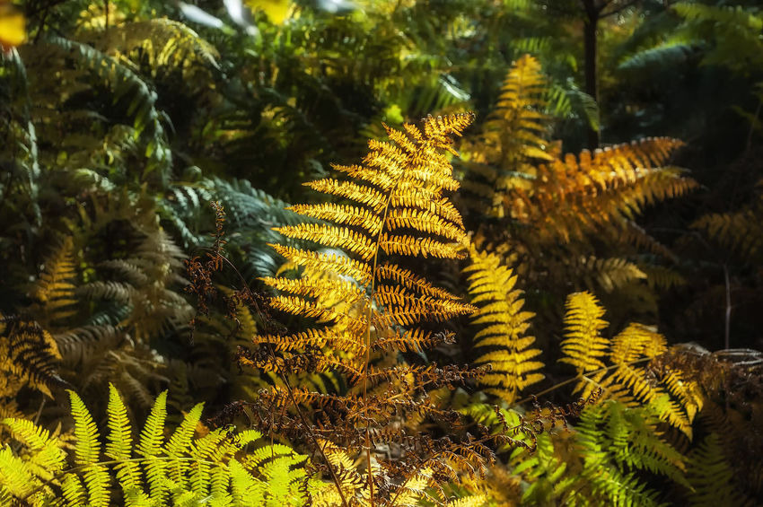 Creech Woods Creech Woods Forest Of Bere Autmn Colors Tree Palm Tree Fern Frond Close-up Plant Green Color