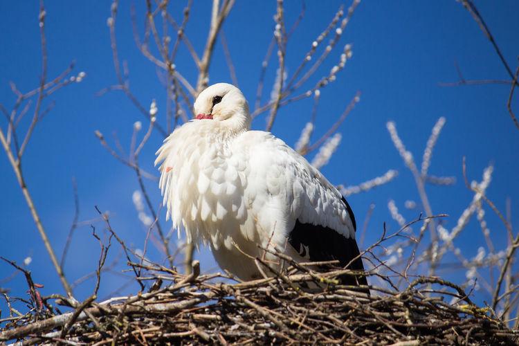 Bird perching on nest