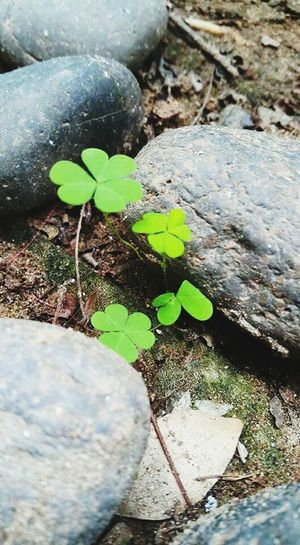 Let it grow. Taken_by_Me. At_somewhere Leaf Plant Growth Close-up Selective Focus Green Color Nature Fragility Outdoors Day Paving Stone Beauty In Nature Freshness Growing Small Botany No People