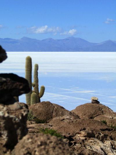 View from Isla Incahuasi (tunupa, volcano in the background), Bolivia. Isla Incahuasi Beauty In Nature Blue Day Nature No People Rock Rock - Object Salar De Uyuni Scenics - Nature Sea Sky Solid Tranquility Water