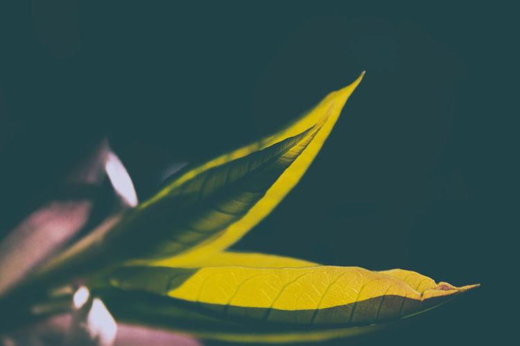 Dark and fresh color nature Blue Flower Flowers Flowers,Plants & Garden Grain Grainy Images Leaf Life Nature Nature Life Nature Photography Nature_collection Naturephotography Plant Plants Plants And Flowers Sky Text Texture Textured  White White Color White Flower Yellow Yellow Flower