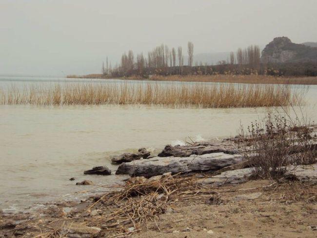 Orhangazi Göl Sazlık Manzara Sonbahar