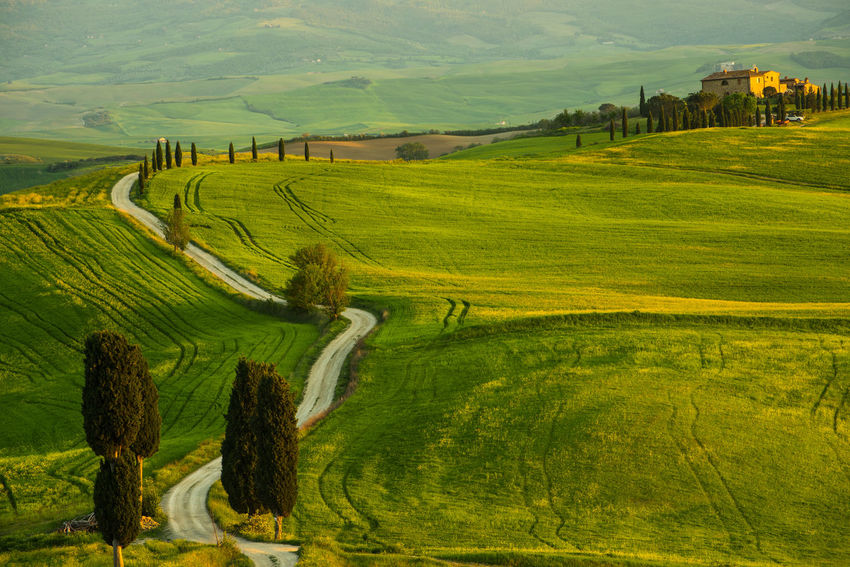 Tuscania, Italyx Tuscania, Italy Agriculture Architecture Beauty In Nature Day Environment Farm Field Grass Green Color Land Landscape Nature No People Outdoors Plant Rolling Landscape Rural Scene Scenics - Nature Tranquil Scene Tranquility Tree