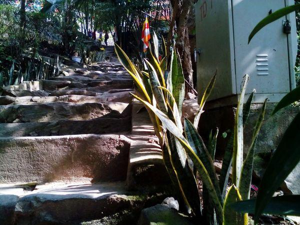 Sunshine Stairways ở Tây Thiên Pagoda Vĩnh Phúc Vietnamese