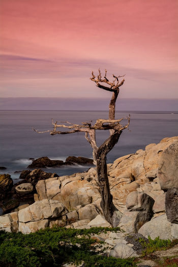 Driftwood on rock by sea against sky during sunset