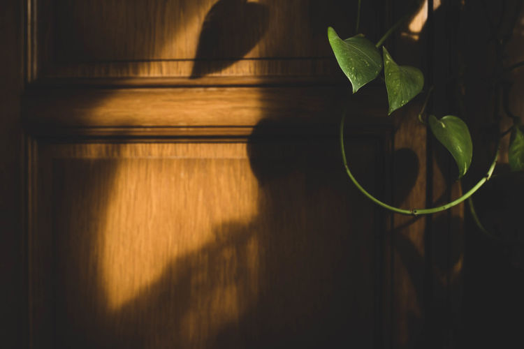 close-up of potted plant against wooden wall Beauty In Nature Close-up Day Flooring Green Color Growth Houseplant Indoors  Leaf Leaves Nature No People November Nusshain 11 18 Plant Plant Part Potted Plant Shadow Sunlight Wall - Building Feature Wood Wood - Material
