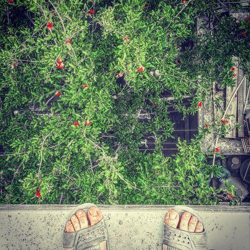 . و تو چه دانی ترس چیست؟ ارتفاع چیست؟ زیباست! . هر اندیشه که میپوشی درون خلوت سینه نشان و رنگ اندیشه ز دل پیداست بر سیما ضمیر هر درخت ای جان ز هر دانه که مینوشد شود بر شاخ و برگ او نتیجه شرب او پیدا مولانا . . پ ن طنز: خواستم خودکشی کنم و خودمو پرت کنم پایین که یهو ننم داد زد که چیکار میکنی؟ گفتم: خودکشی 😚 برگشته میگه الان نه، مهمون داره میاد 😚 منمیدونمپسرپادشاهمکهوقتیبچهبودمجابجامکردن