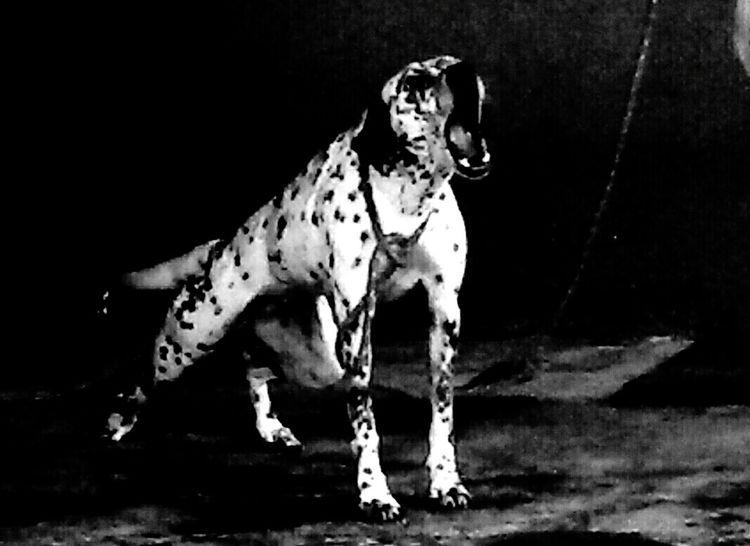 Boanoite #goodnight Photography Mydog♡ Dogbed