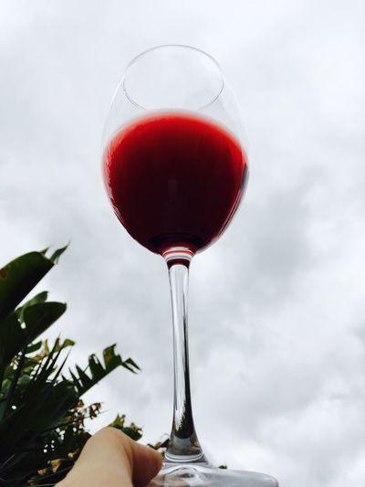 Brasil Natureza Vinho Vino Conchaytoro Chile Loucosporvinho Locosporvino