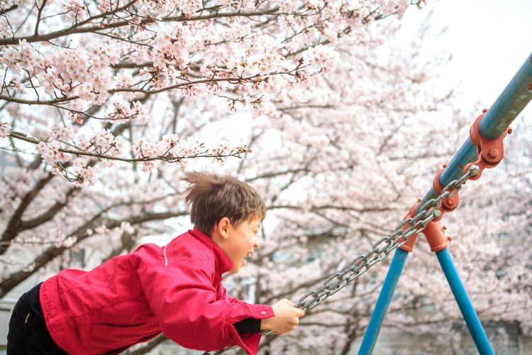 Cherry Blossoms Cherry Blossoms Childhood Innocence Japan Leisure Activity Lifestyles Nature Outdoors Spring Swing Tree