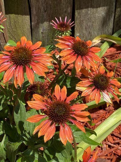 Close-up of orange flowering plants