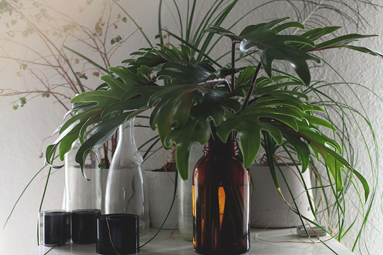 View of pot plant in vase