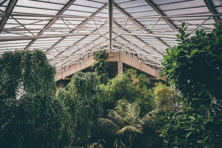 Inside the Conservatory at the Barbican Centre in London, United Kingdom. Architecture Barbican Barbican Centre Beauty In Nature Built Structure Conservatory Day Glasshouse Green Color Greenhouse Growing Growth Nature No People Plant Tranquility Tree