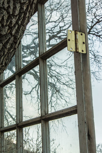 Through the window clear Tree Window No People Safety Day Security Plant Outdoors Protection Nature Metal Low Angle View Glass - Material Transparent Wood - Material Architecture Tree Trunk Focus On Foreground Trunk Winter
