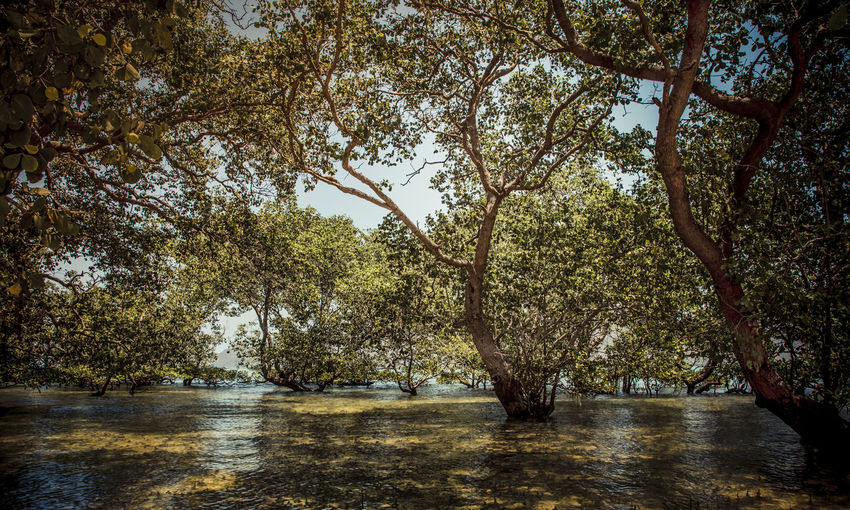 In a mangrove forest close to Kuta Beach in Lombok, Indonesia. Light and shadow coming through the leaves. Tree Plant Water Nature Growth Beauty In Nature Tranquility No People Scenics - Nature Waterfront Day Forest Land River Tranquil Scene Outdoors Trunk Tree Trunk Flowing Water Mangrove Mangroveforest INDONESIA Lombok Pietrocostanzophotographer
