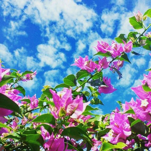 Flores de Mato Grosso... Foto: @lu_poiani _________________________________ Matogrosso Brasil Bresil  Brazil Brazilien World Southamerica America Flores CentroOeste VejaMatoGrosso IloveBrazil Cerrado BrasilCentral MatoGrosso_Brasil MatoGrossoéLindo Nature