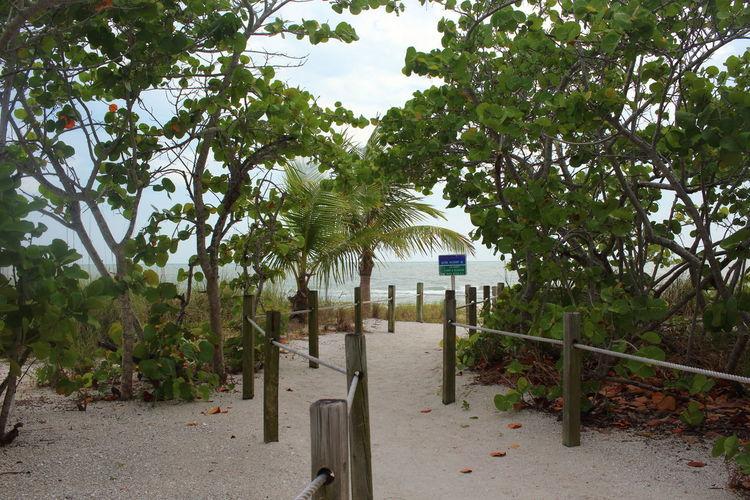 Beach Beach Photography Beauty In Nature EyeEM Beach Photography Fort Myers Beach Green Green Color Gulf Of Mexico Idyllic No People Outdoors