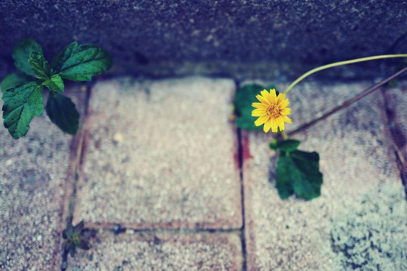 Flowers Yellow Flower That's Me Taking Photos LEICA Q Green Enjoying Life