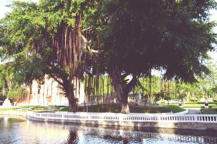 Thailand Travel Green Color Nature Water Tree No People Vacations Pataya Summer Day