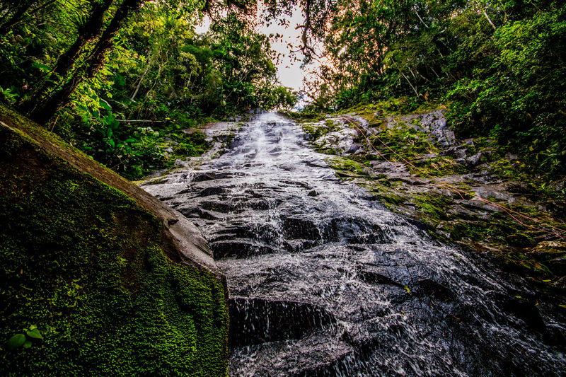Ecoturismo Meleiro, Brazil Turismo De Aventura Beauty In Nature Day Ecoturism Forest Growth Motion Nature No People Outdoors Scenics Tranquil Scene Tranquility Tree Water