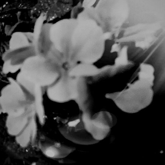 Eyeemblack&white Eyeemcitys Eyeemmarket Photography ın Motion Eyeemdarkart Eyeemnightshots Hello World EyeEm Gallery EyeEm EyeEmBestEdits Istanbul Turkey Eyeemaroundtheworld Eyeembestshots - Black + White EyeEmBlackAndWhite EyeEmFlower EyeEm Best Shots - Black + White EyeEm Nature Lover Eyeemnature EyeEmNatureLover#flower#Nature_collection