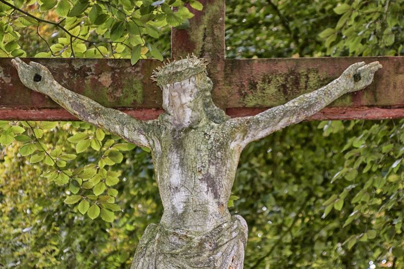 Branch Cemetery Close-up Cross Day Green Color Growth Nature No People Outdoors Plant Stone Cross Tree Tree Trunk