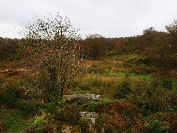 Autumn Colours Tree Field Bracken Landscape Beauty In Nature Yorkshire