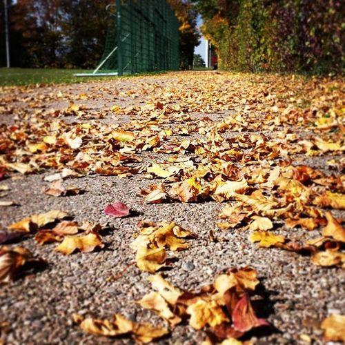Herbst Atumn Neuesbild Newpicture newneuhashtaglikeseinfachl4llikeforlikefollowusf4fpicofthedaypotdpictureofthedaysunnydayschönertagherbstlichblätterorangeschönnicedaysunshinesonnig -k♡