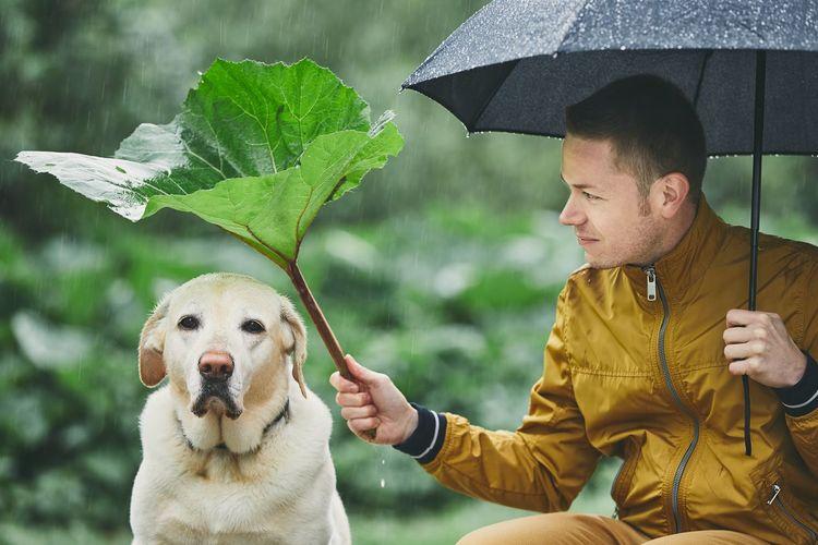 Man with dog holding umbrella