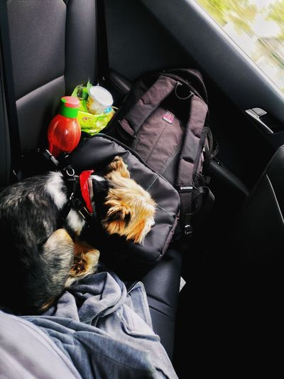 High angle view of dog in car