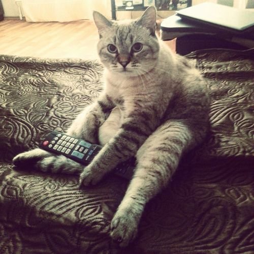 Cat Cats Of EyeEm Cat♡ Cat Lovers Cat Watching Cat Watching TV Cats 🐱 Catoftheday Cat Photography Cat Relaxing  Cat Richard