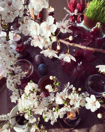It's Iranian's new year,nowrouz.🌸 It's begining of spring and everything gonna be alive again,wish you happiness Happy Nowroz Nowruz Haftsin Beginnings Freshness Spring Welcome Spring! Flower Iran Coulture