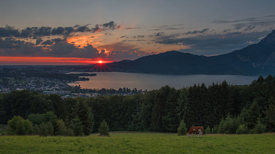 Sonnenaufgang Sonnenstrahlen Landschaftsfotografie Sonne Traunsee Salzkammergutregion Gmunden Am Traunsee Gmunden Altmünster Am Traunsee Altmünster Sky Beauty In Nature Scenics - Nature Cloud - Sky Mountain Tree Tranquility Tranquil Scene Plant Sunset Non-urban Scene Idyllic Land No People Nature Water Environment Landscape Field Outdoors