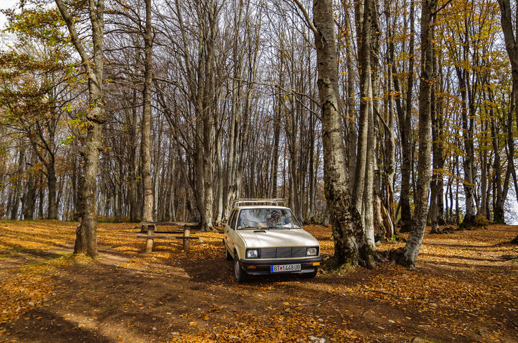 Exploring the little mountain town of Krushevo in Macedonia Bare Tree Branch Car Day Forest Land Vehicle Nature No People Outdoors Sky Transportation Tree Tree Trunk
