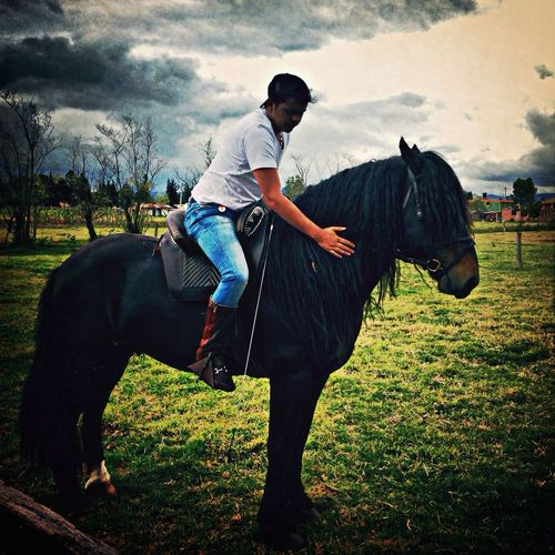 Horse Colombia