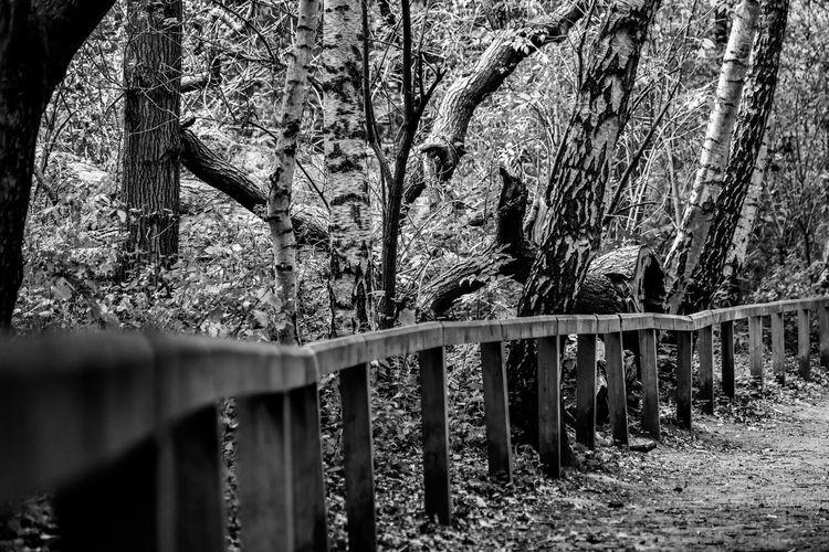 Trees Wood