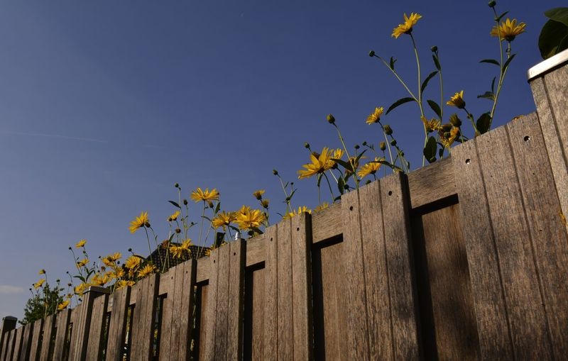 Low Angle View Of Flowers Behind Fence