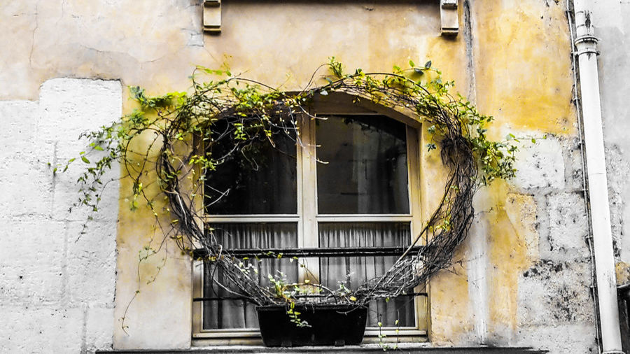 The window is closed... Secrets Old House Curtains Plant Idyllic Centered Perspective Marketing Copy Space City Marketing Close Up Love Heart Shape Heart In Front Window Sill Window Yellow Coziness City Window Façade Architecture Building Exterior Close-up Built Structure Plant Ivy Closed Window Box Historic