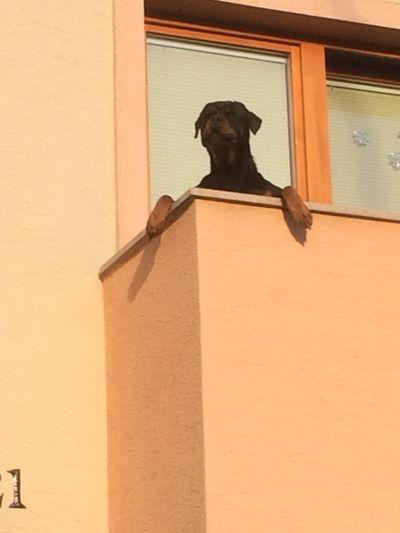 Dog Cool