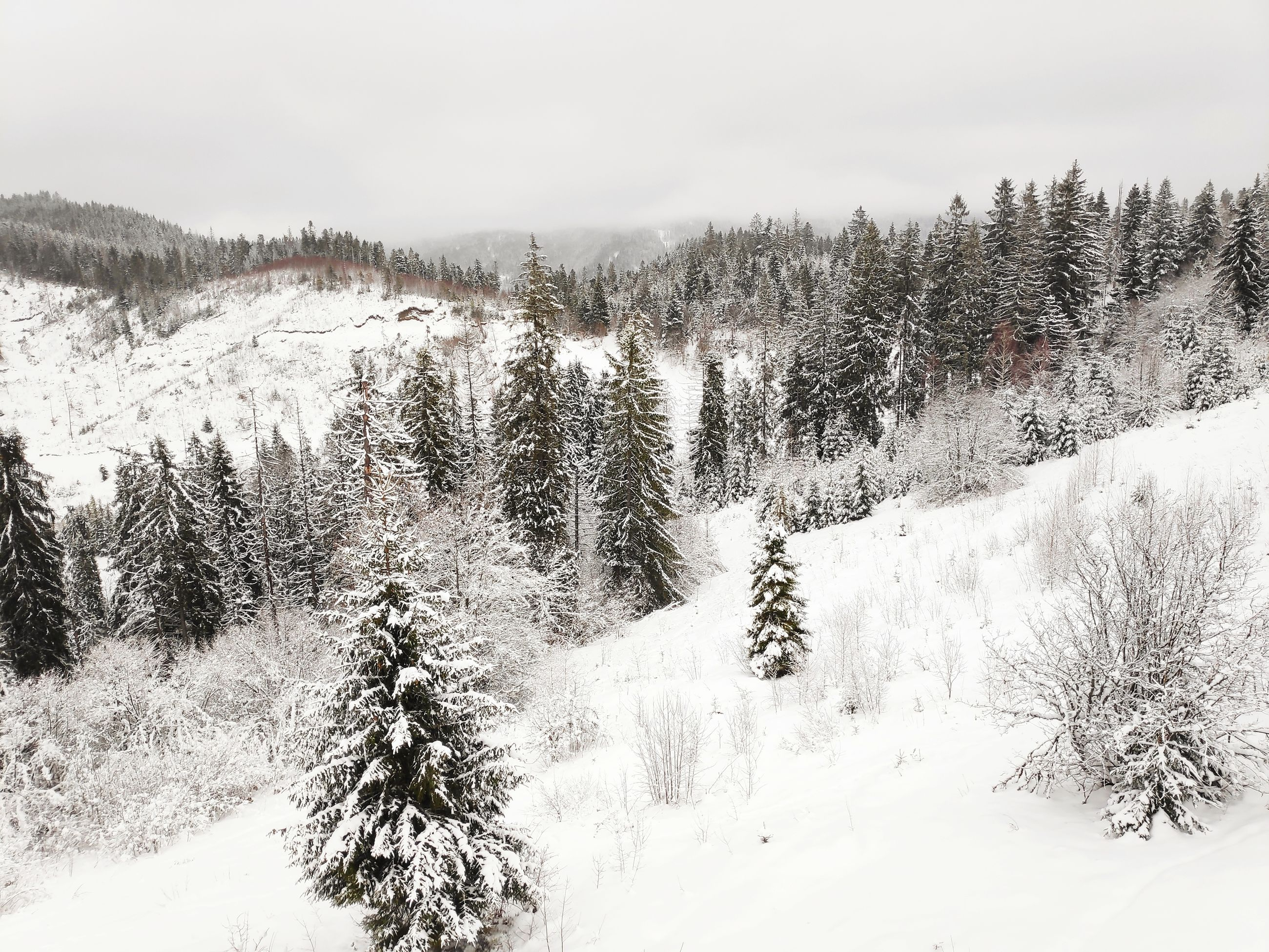 snow, cold temperature, winter, plant, tree, beauty in nature, scenics - nature, tranquil scene, tranquility, non-urban scene, nature, covering, sky, mountain, no people, environment, white color, day, land, outdoors, coniferous tree, pine tree, snowcapped mountain, snowing