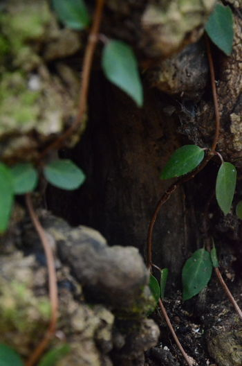 Plant Part Plant Leaf Growth Nature No People Close-up Green Color Selective Focus Day Land Field Beauty In Nature Tree Tranquility Outdoors High Angle View Tree Trunk Focus On Foreground Trunk Leaves DeSoto Falls