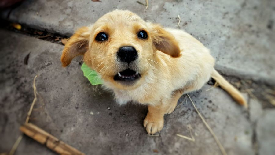 High angle portrait of puppy on street