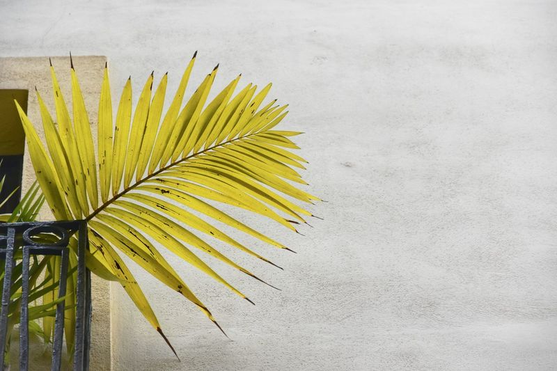 Low angle view of palm leaves at building balcony
