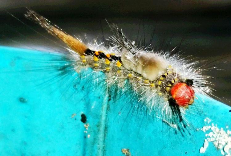 Caterpillar Caterpillarlife Abugslife Insect Photography Insects  Bugs Caterpillars  EyeEm Nature Lover EyeEm BestofEyeEm Getty & Eyeem Getty Images
